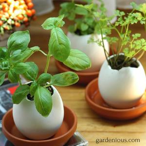 gardenious.com